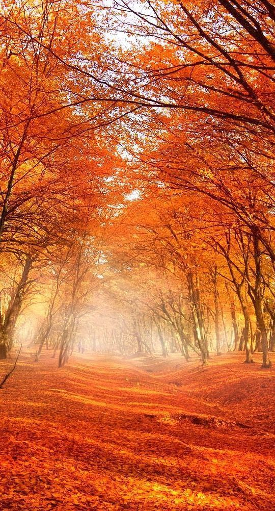 Nature - Feuillage - Automne - Picture - Free