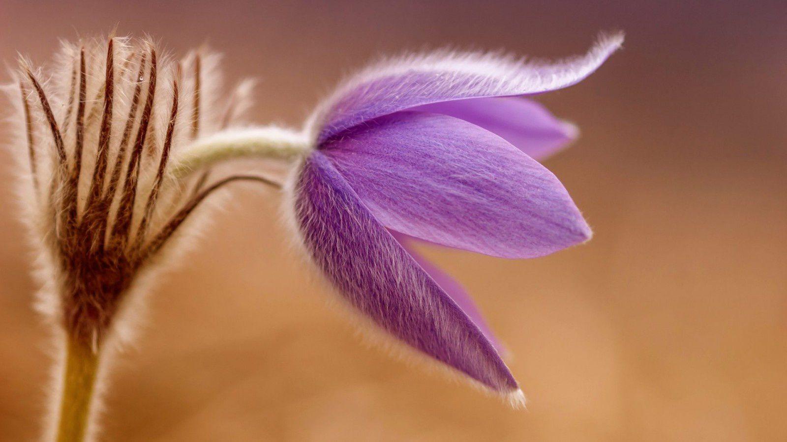 Fleurs - Nature - Wallpaper