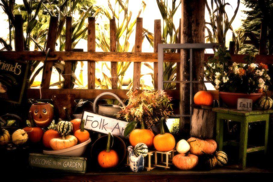 Halloween - Citrouilles - Automne - Fête - Wallpaper - Free