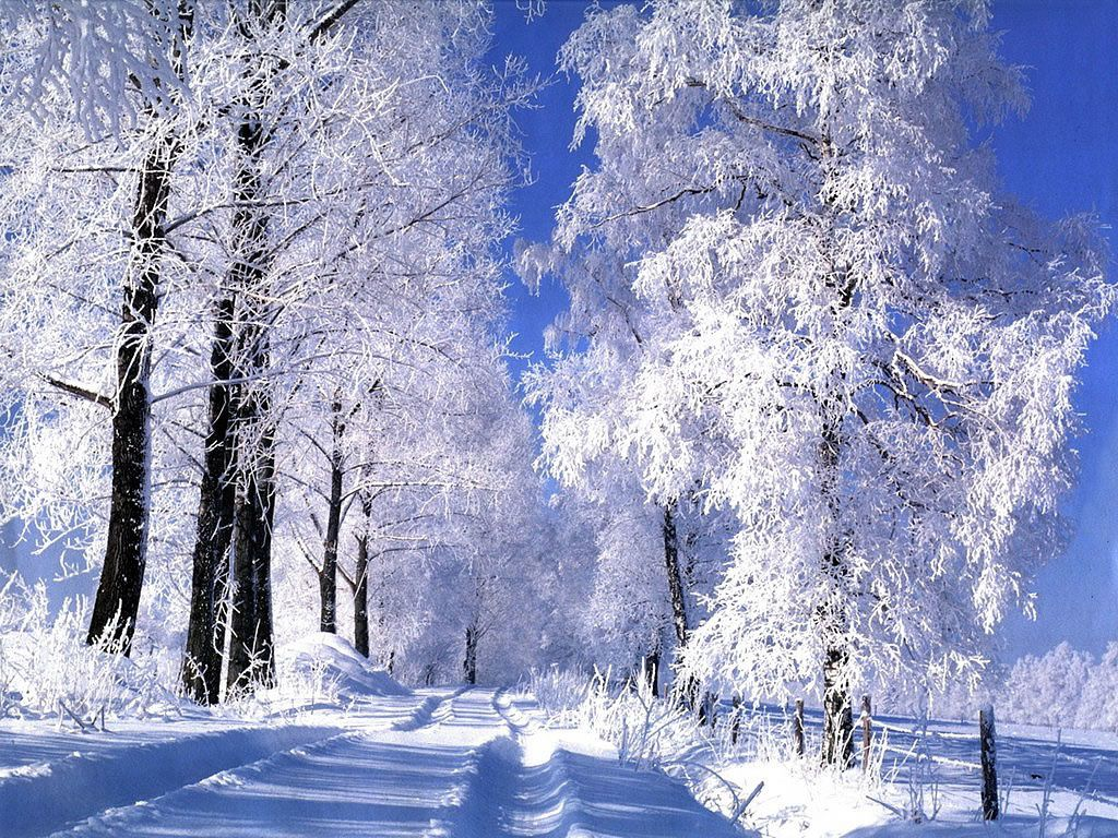 Paysage Nature Hiver Neige Wallpaper Free Le