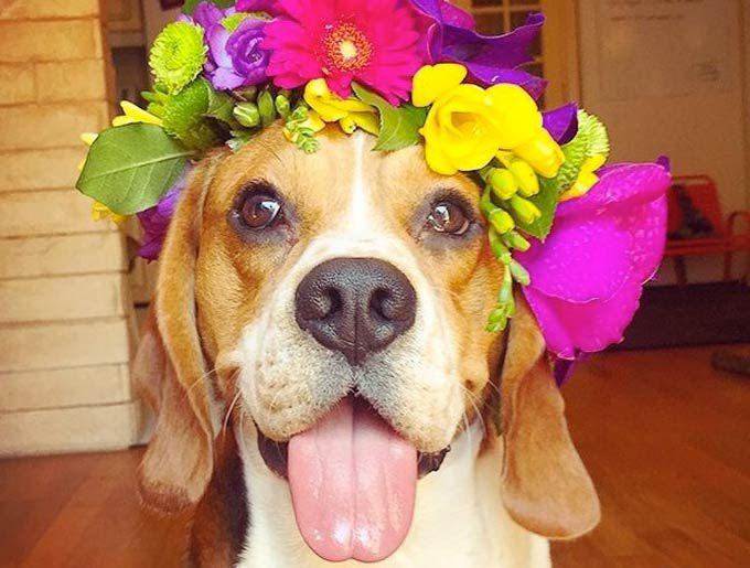 Les élus vierzonnais n'aiment ni les fleurs, ni les chiens !