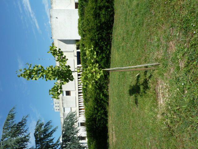 Saviez-vous que nous avions un arbre de la laïcité à Vierzon ?