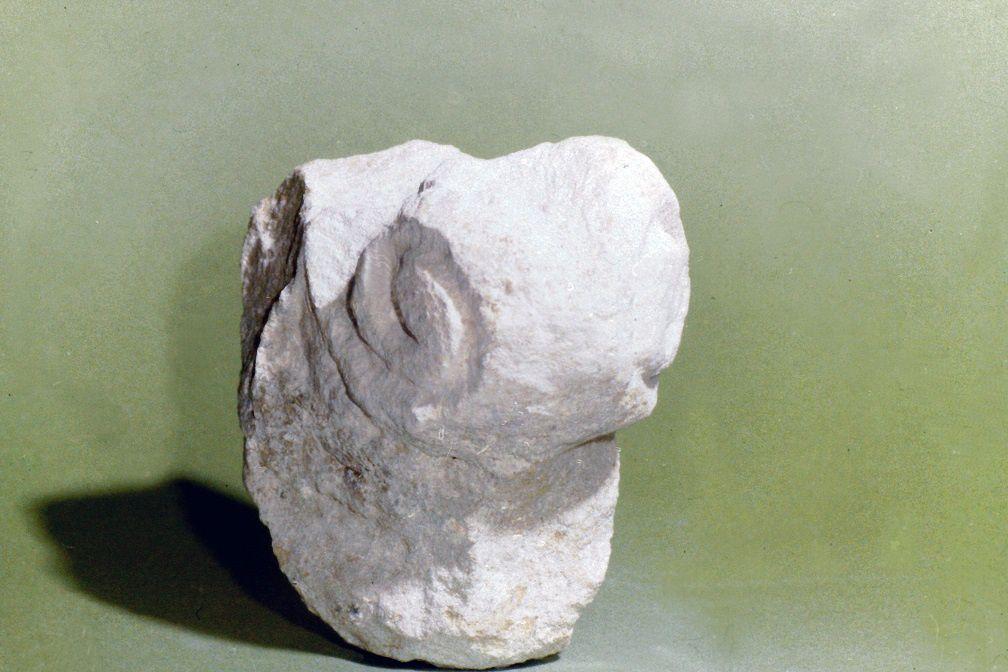 Les trésors enfouis de l'ancienne abbaye de Vierzon