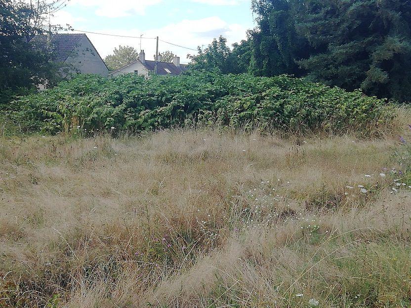 3) Vive le tourisme à Vierzon : l'ancienne station d'épuration entre ronces et épines