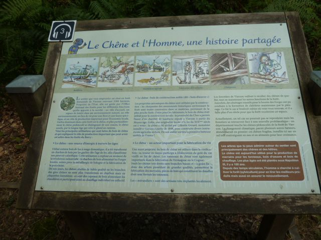 Le sentier de la Salamandre... un peu de fraîcheur en forêt de Vierzon