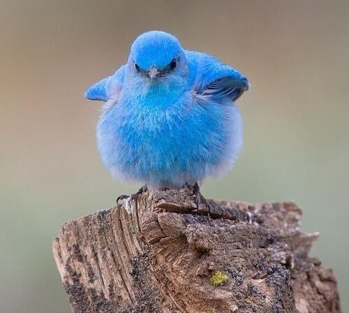 La leçon de l'oiseau bleu