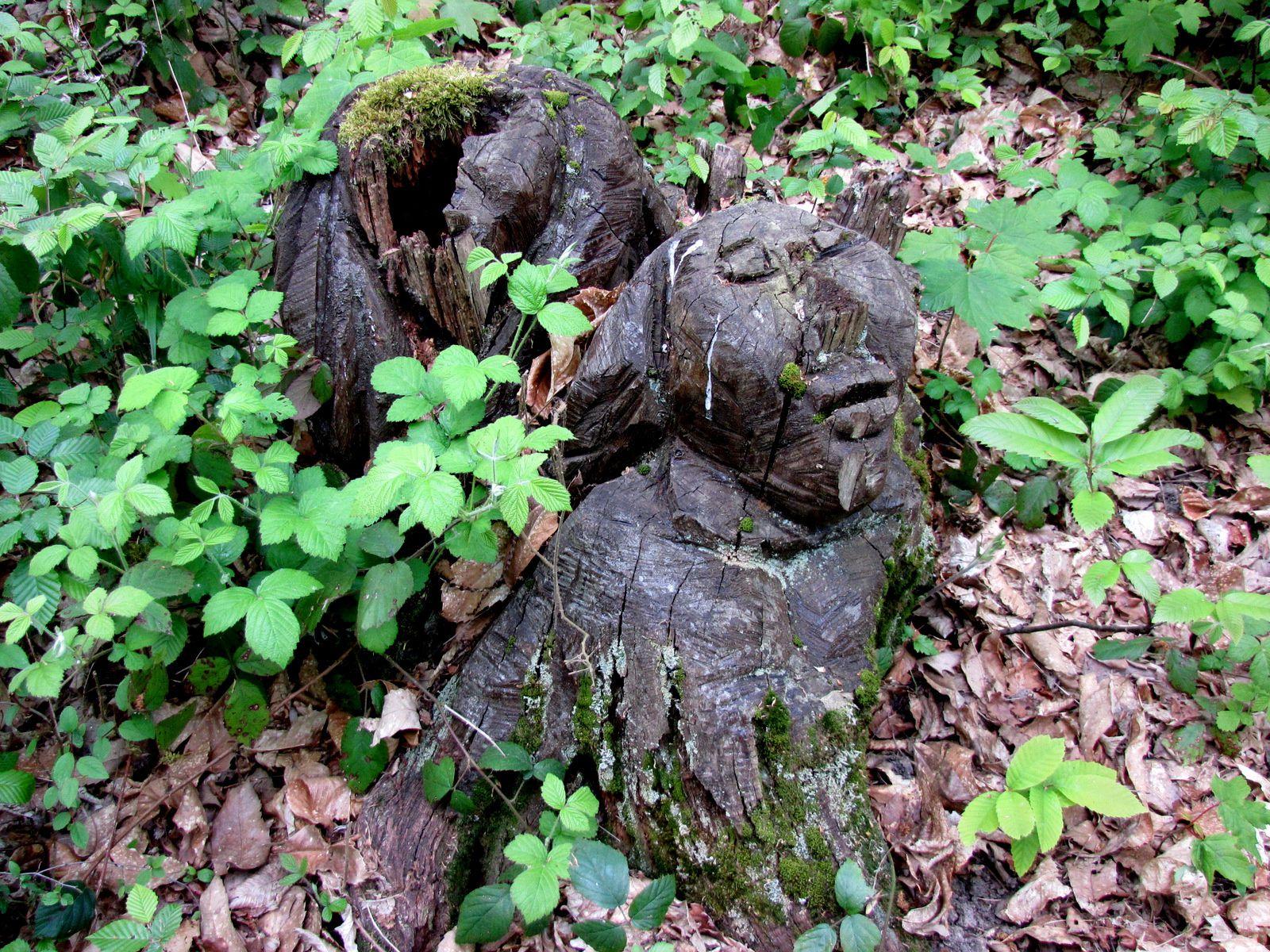 Souche sculptée (visage), parc de Marly