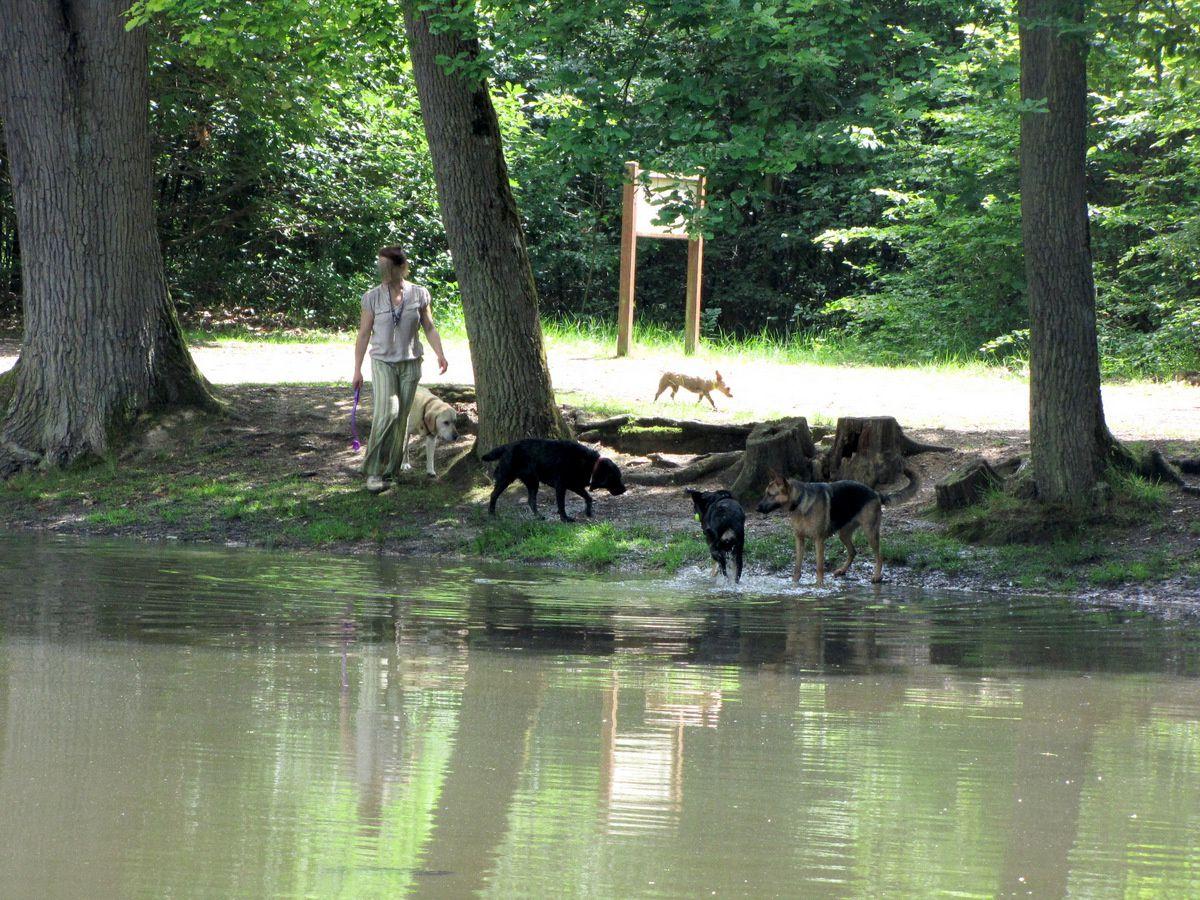 L'aspect pédagogique de la mare aux canes, forêt de Saint Germain
