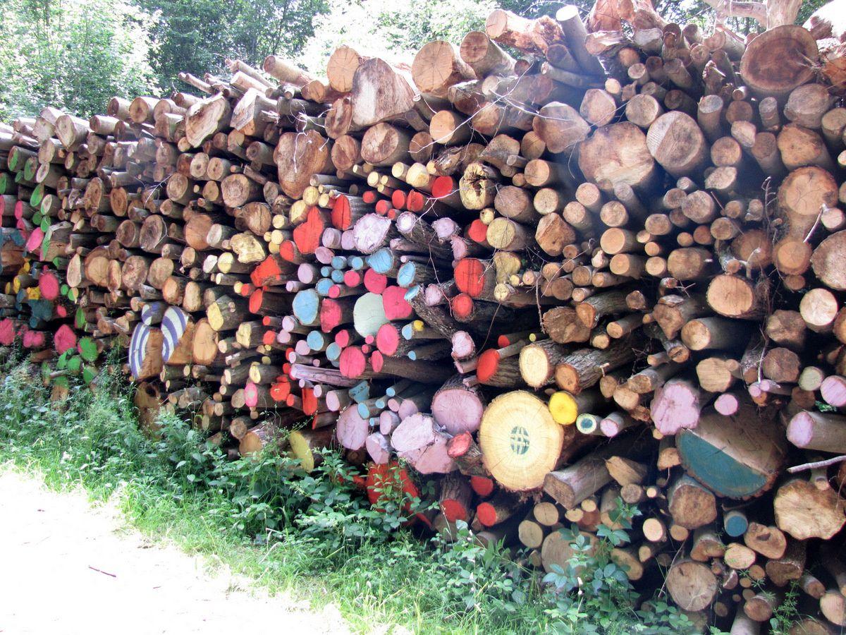 Tas de bois et art, forêt de Saint Germain-en-Laye