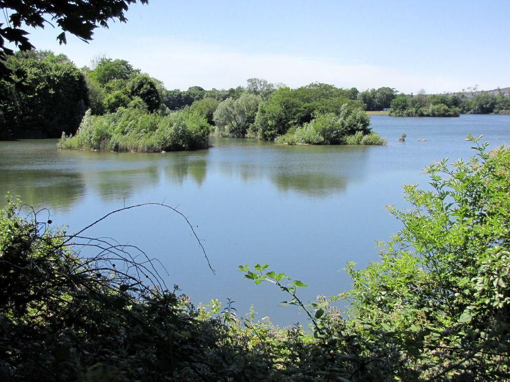 Bernaches du Canada de l'étang du Corra, forêt de Saint-Germain-en-Laye