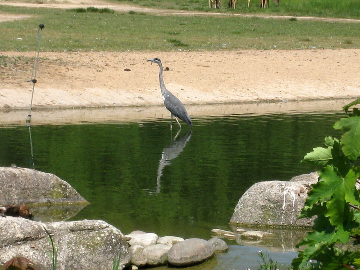 Oiseaux du Parc de la Tête d'Or, Lyon