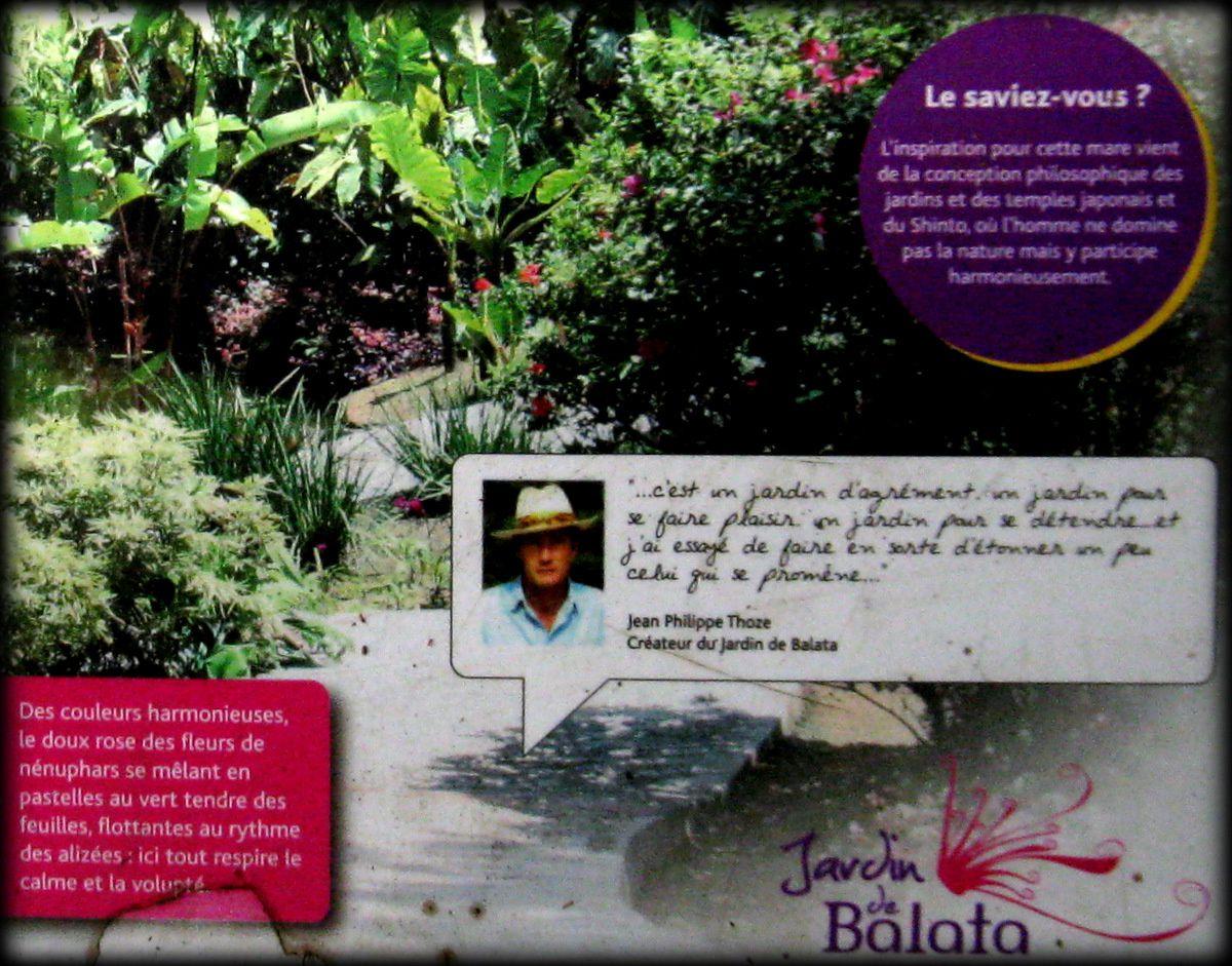 La mare japonaise du jardin de Balata, Martinique.