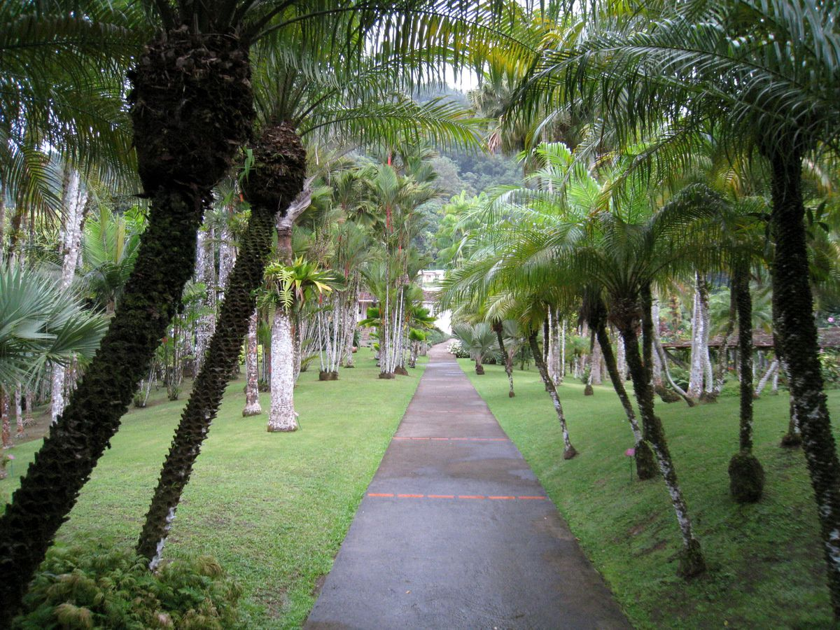 L'allée royale du jardin de Balata, Martinique.