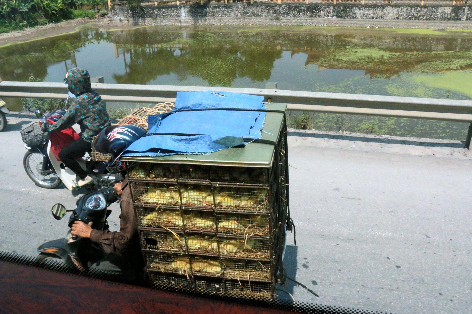 Sur la route aux environs de Hanoï, Vietnam