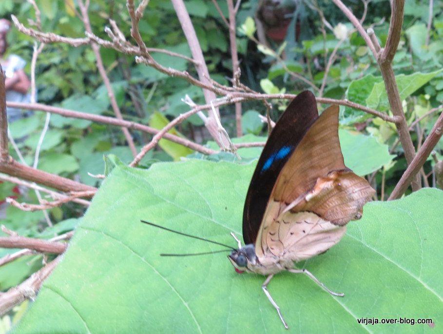 le tropique du papillon , la serre