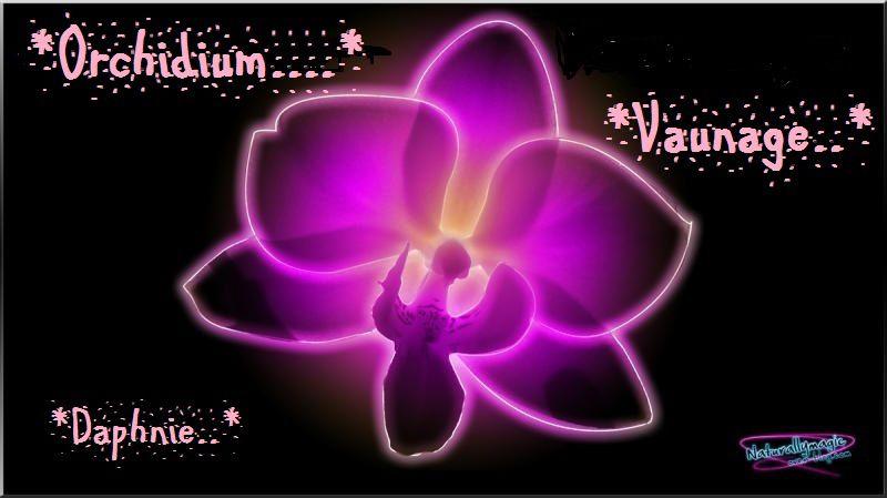 Bulles de bonheur : Epidendrum pseudepidendrum variété album
