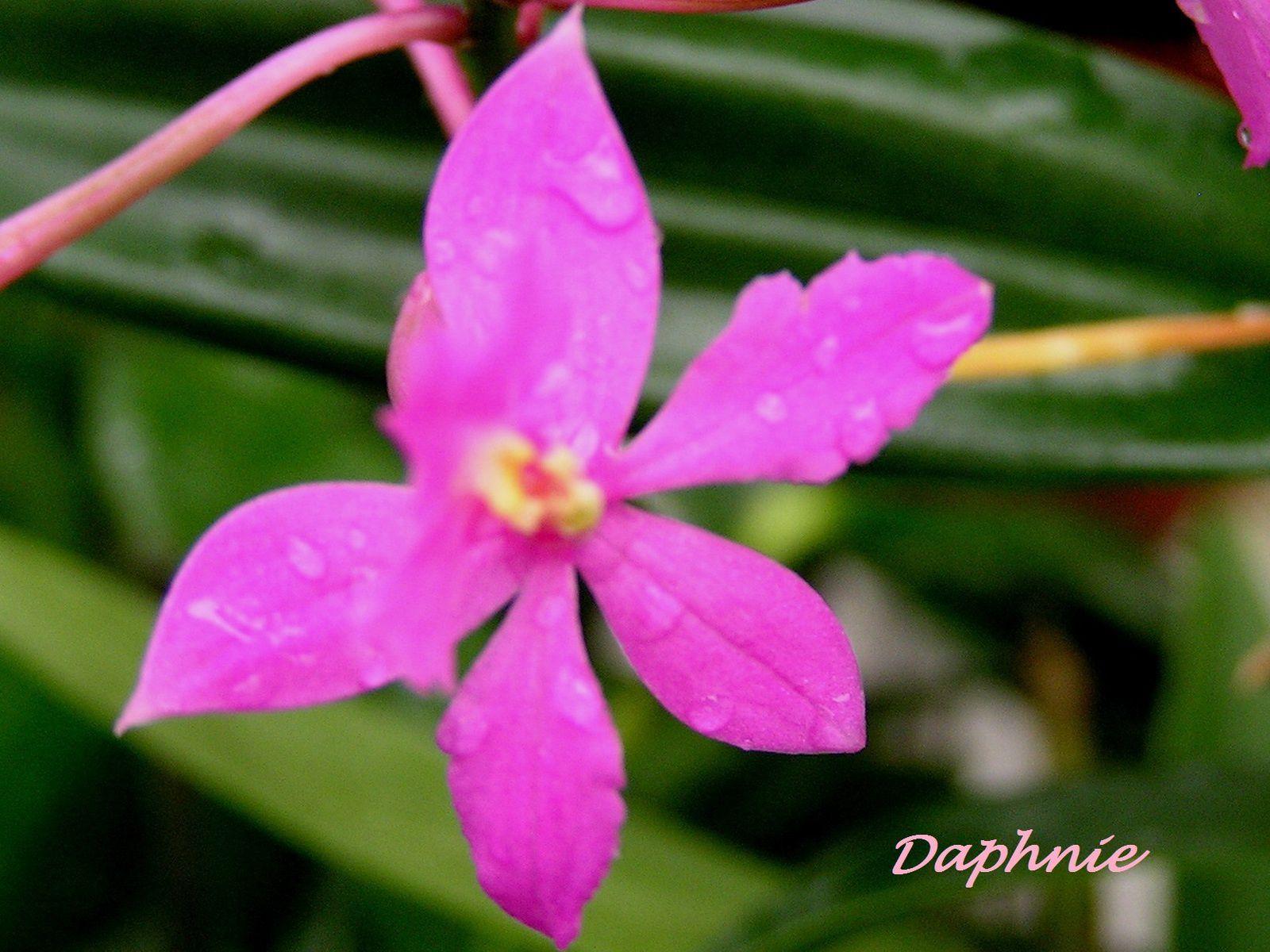 Ma vie en Orchidées : les floraisons de 2009