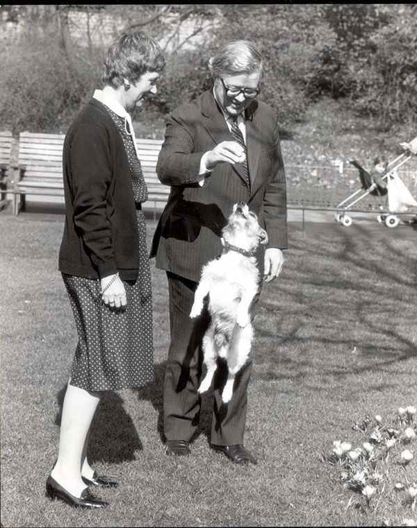 The Howes play with their Jack Russell, Budget, in St James's Park, London