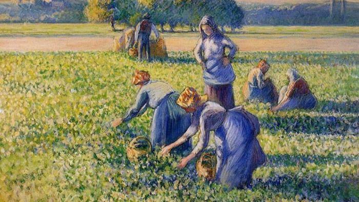 """""""La cueillette des pois"""" de Camille Pissarro apparentait à la collection Simon Bauer, qui a été spoliée durant la Seconde guerre mondiale. Photo Domaine public"""