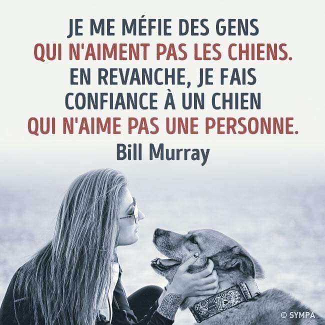 AMOUR INCONDITIONNEL 💖😻🐺😍😻💌❣️🌼