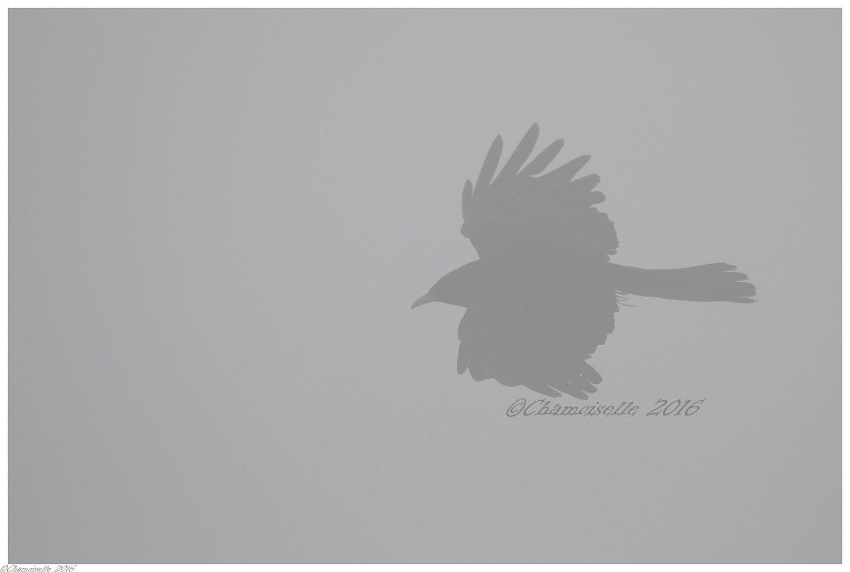 petites plumes