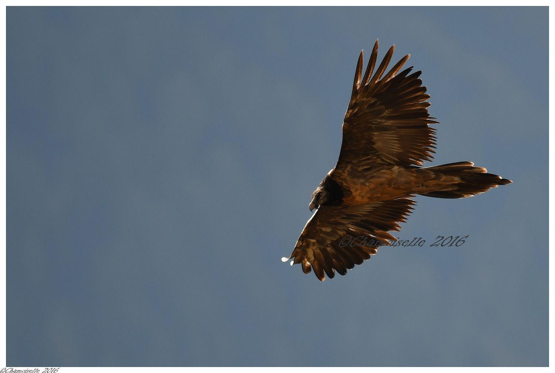 grandes plumes