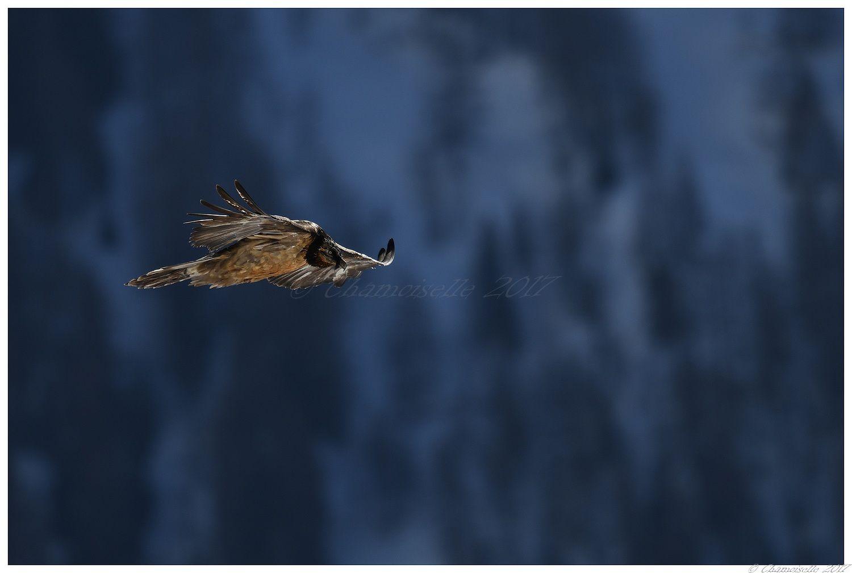petites et grandes plumes suite 4