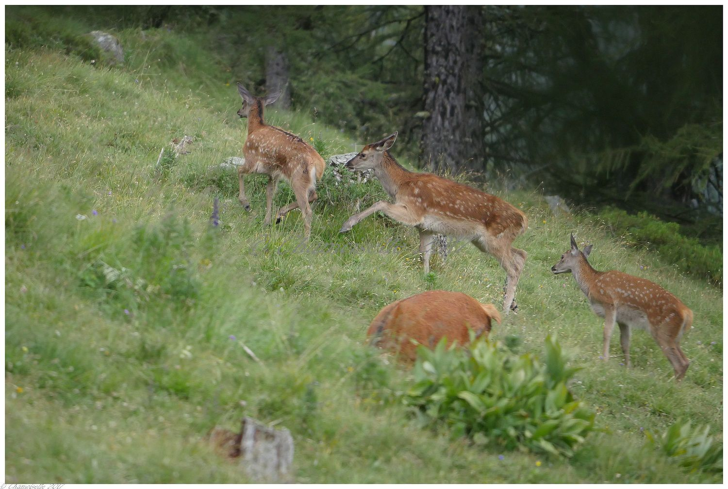 Bambi suite 3