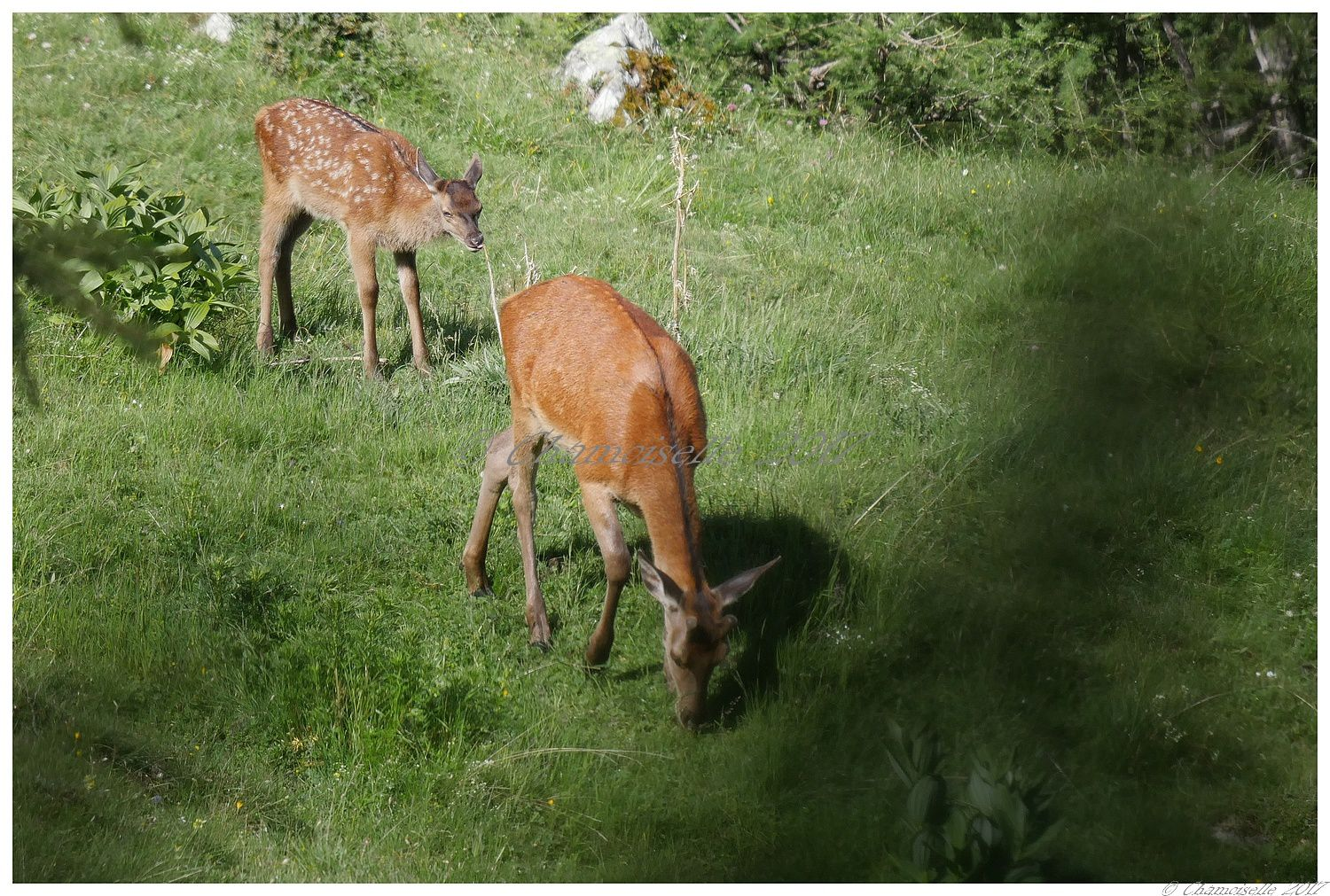 Bambi suite 5