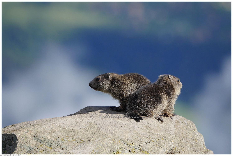 marmottes suite 2