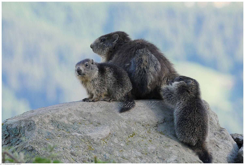 marmottes suite 8
