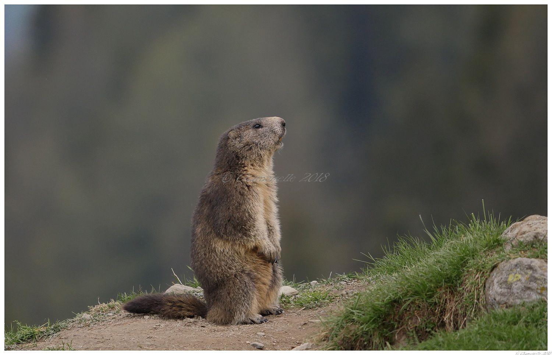 chez les marmottes suite 1