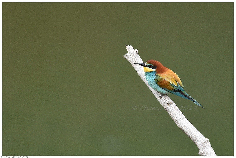 plumes de couleurs