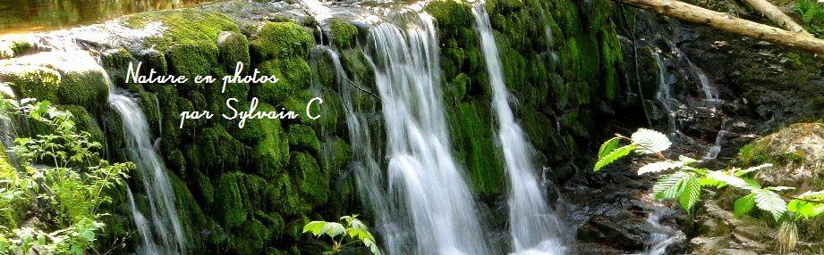 La nature dans mes photos... le plaisir de capturer et de partager les merveilles de la nature !