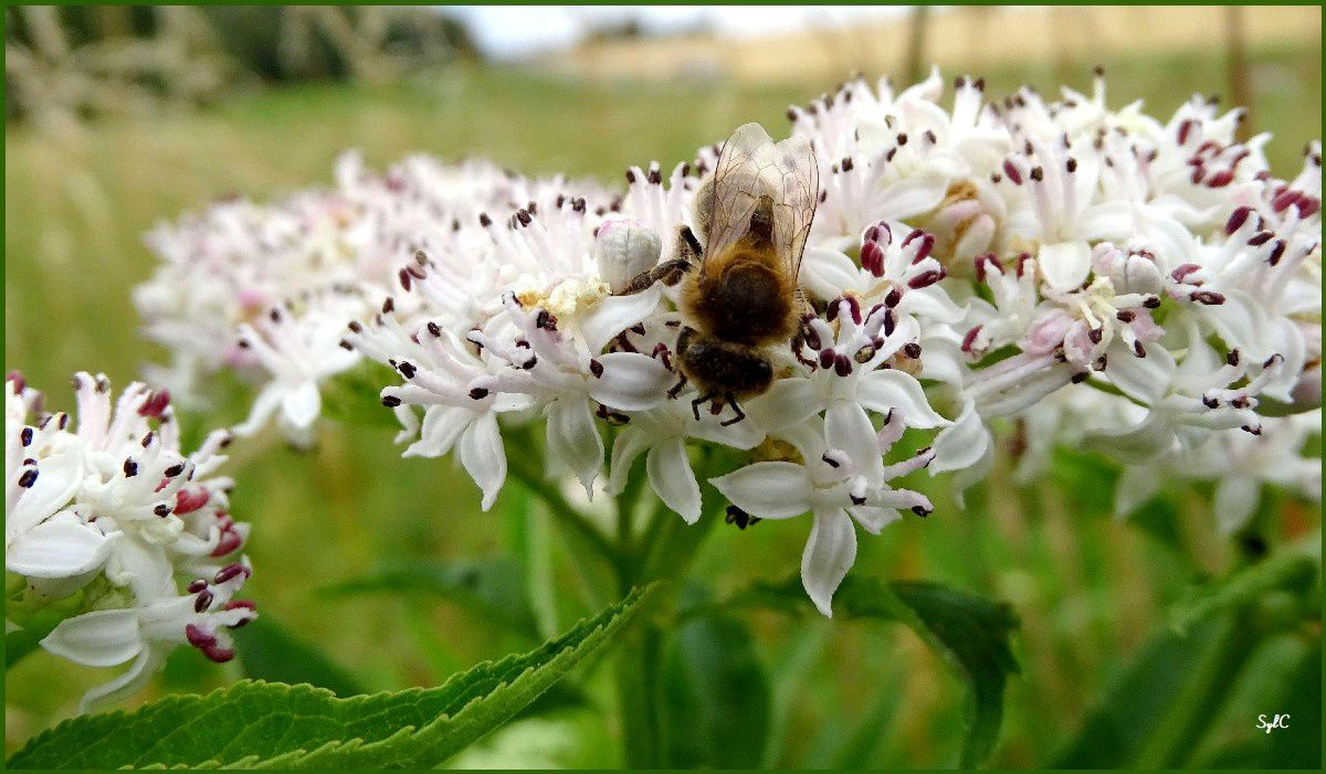Une abeille en plein travail...
