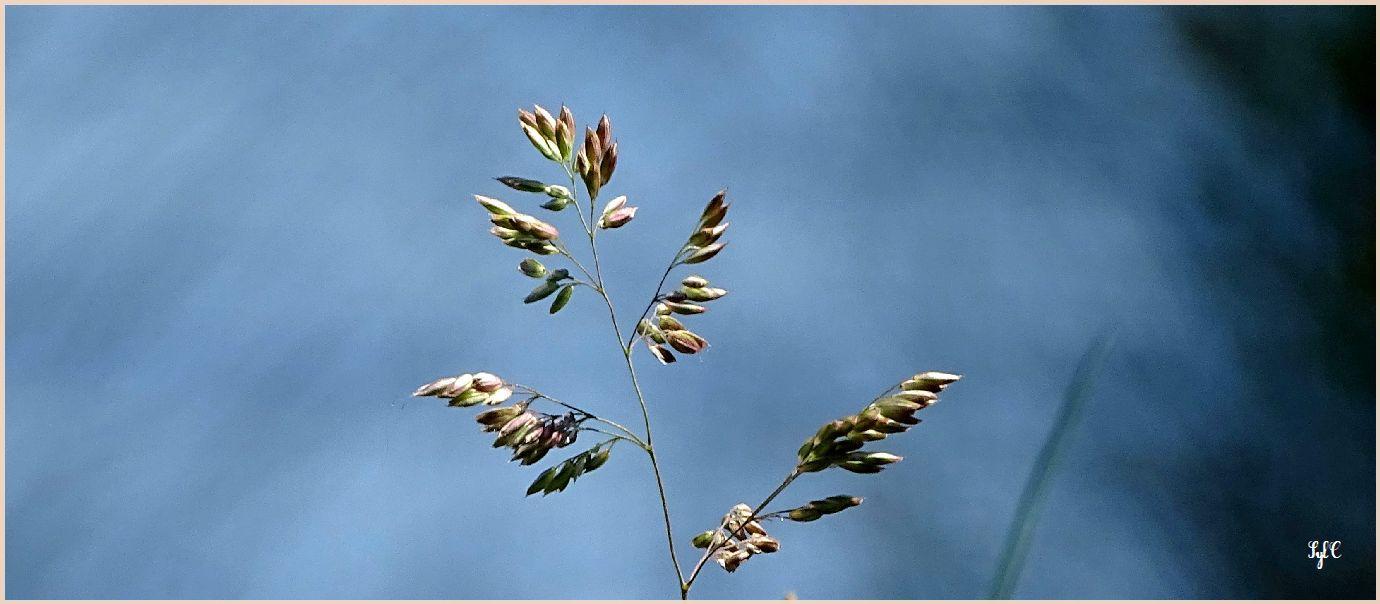 Diversité dans la végétation... - 5 photos
