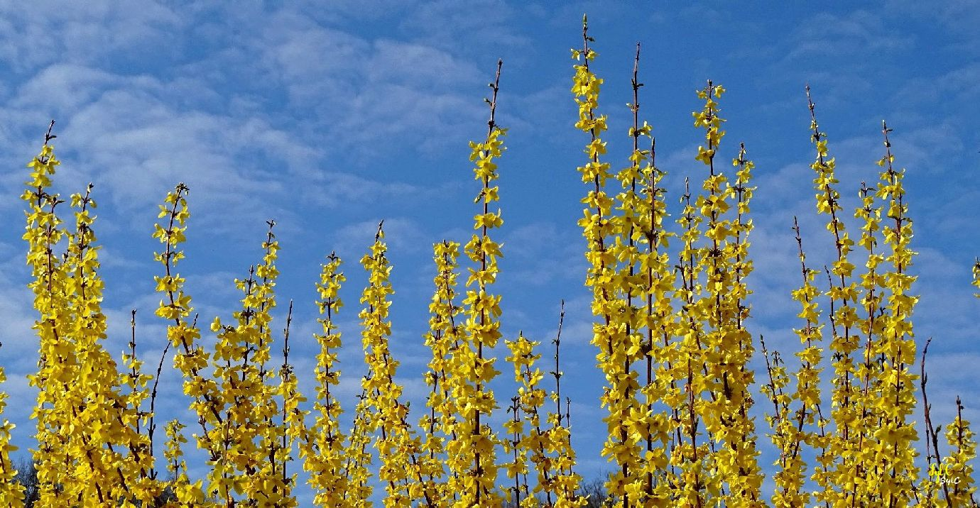 Un peu de couleur jaune pour égayer un weekend gris - 7 photos