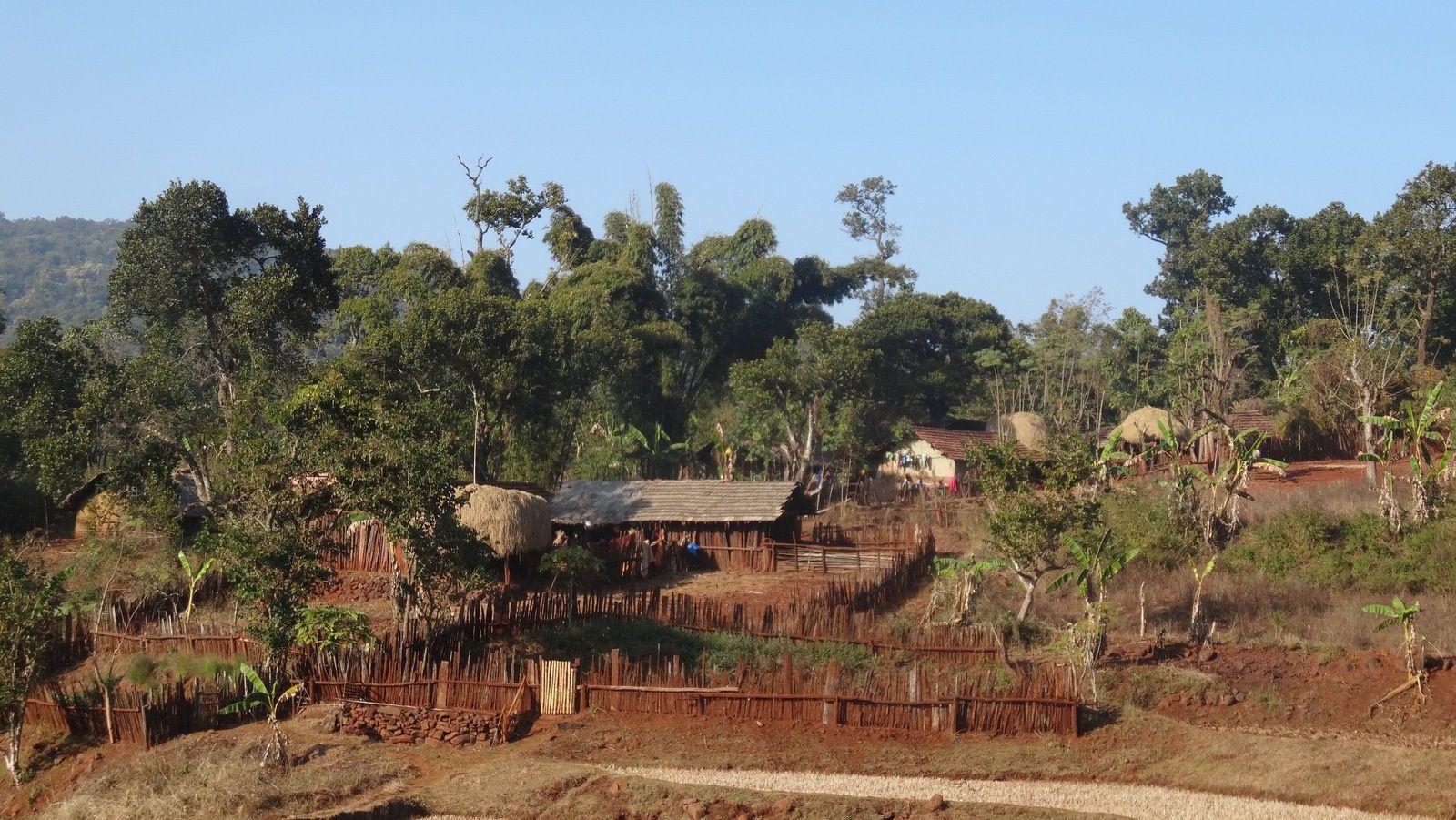 Odisha - 2 : Simlipal