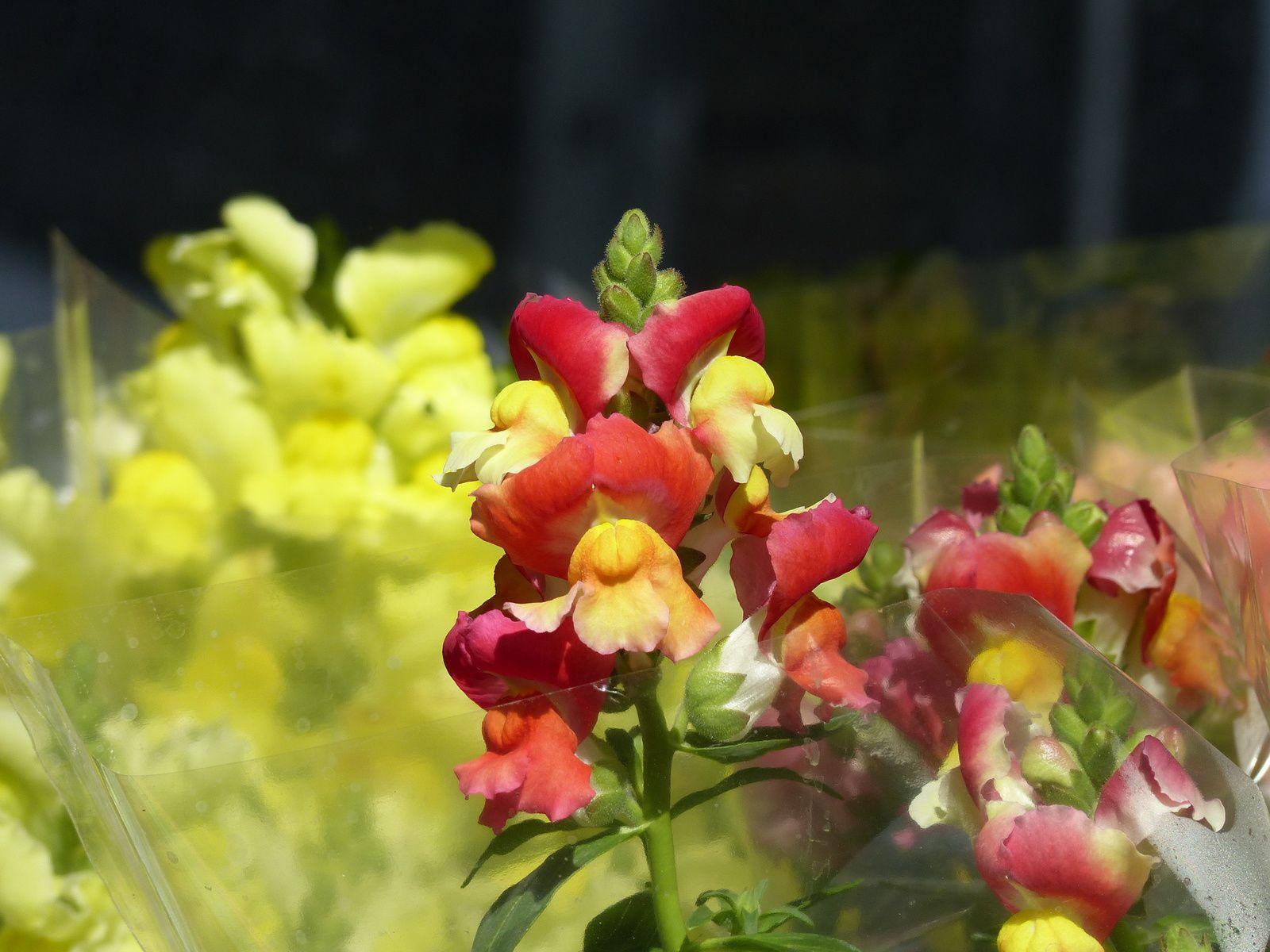 Merci à Alain Kritchmar de m'avoir emmené rue des jardiniers à Rungis, paradis des couleurs, des senteurs, des parfums inextricables....pures instants de bonheur!