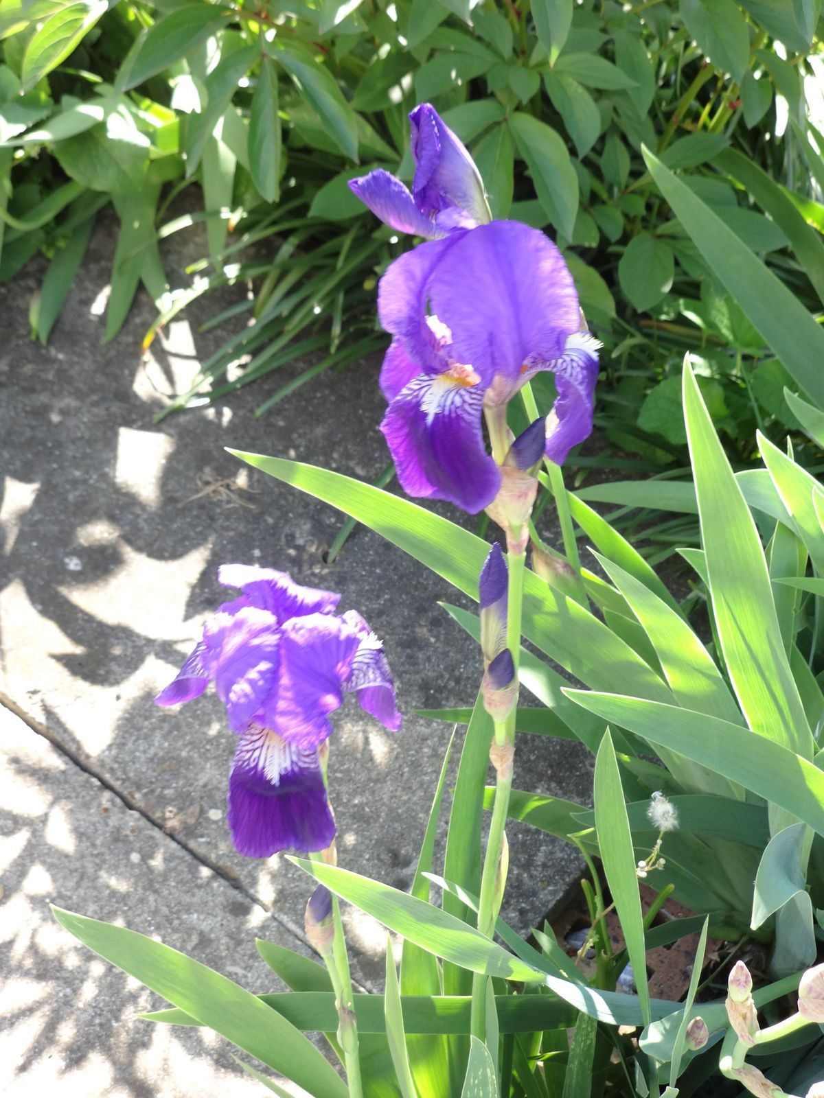 Lundi Soleil : Violet
