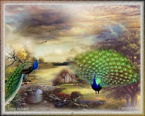 Création Copyright par Tony richard pour le poème Le paon des îles. Tous droits réservés