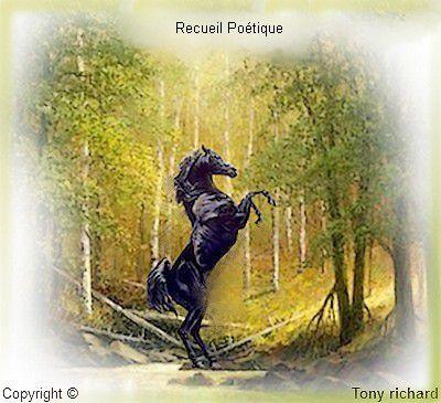 Page de couverture par Tony richard pour le recueil PAS PLUS. Tous droits réservés