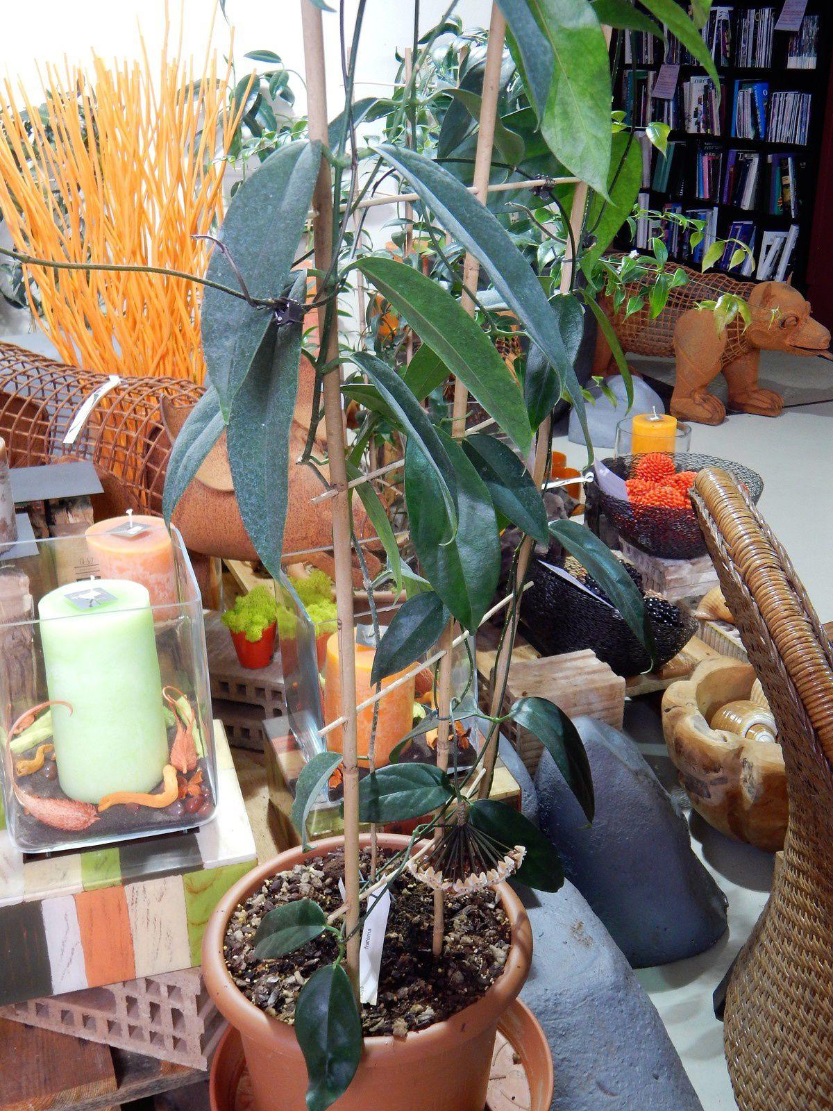 Visite à l'Orchidarium de Prangins