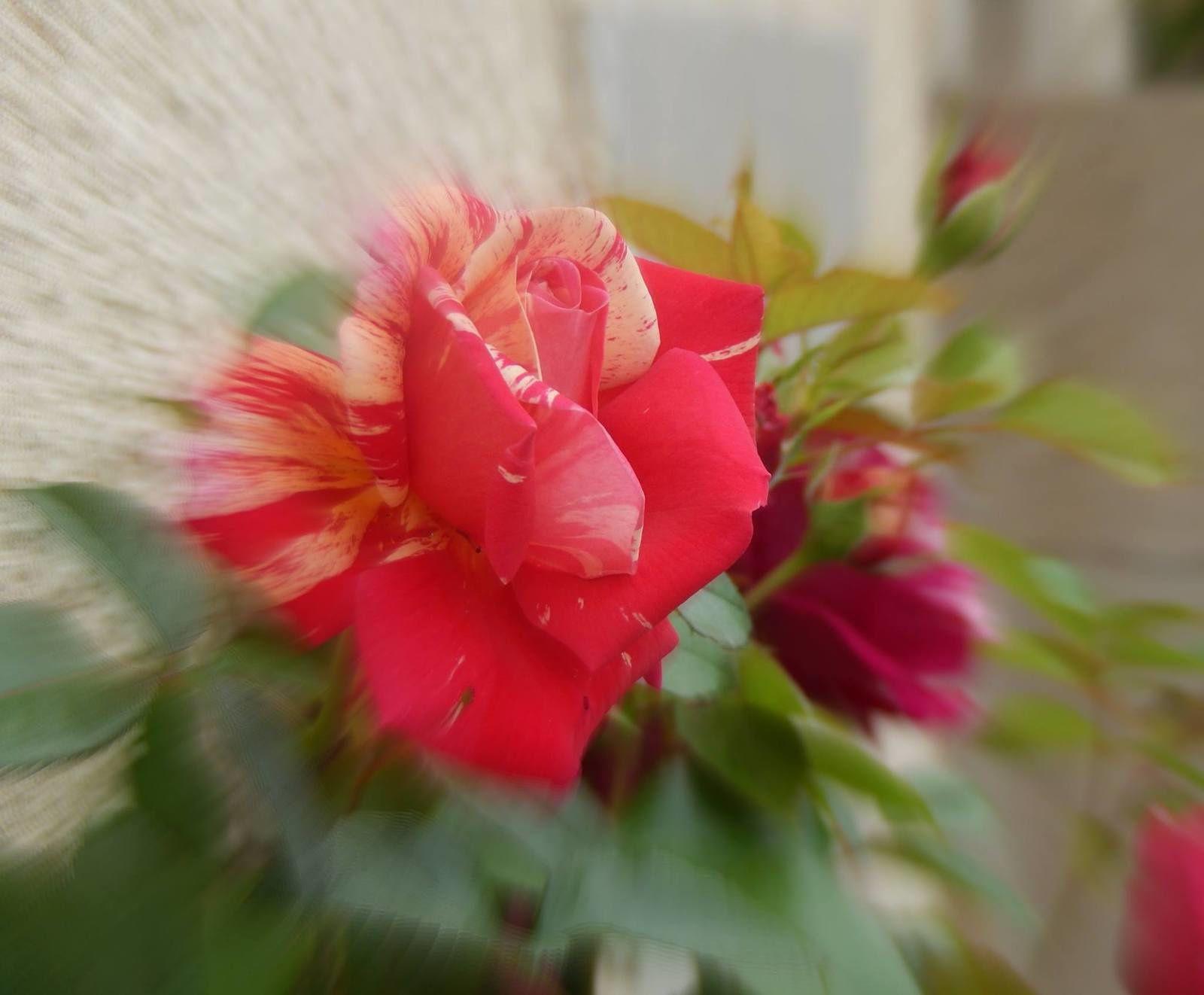 Photos artistiques sur mes floraisons et autres sujets
