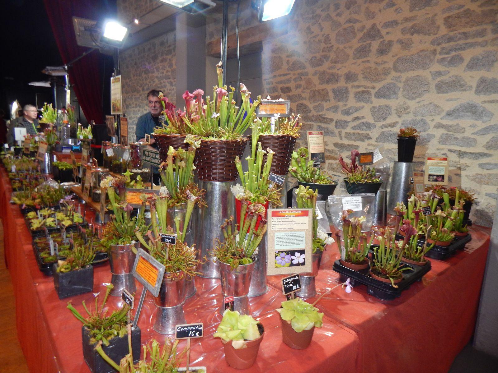 Stand de plantes carnivores