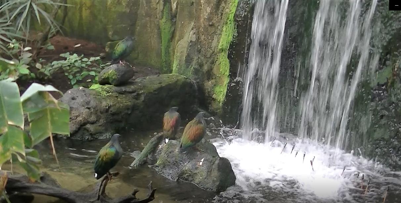 Serre tropicale des oiseaux