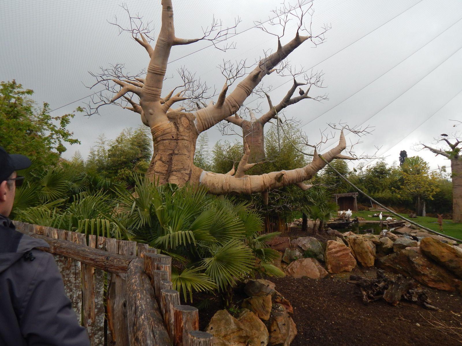Visite du ZooParc de Beauval
