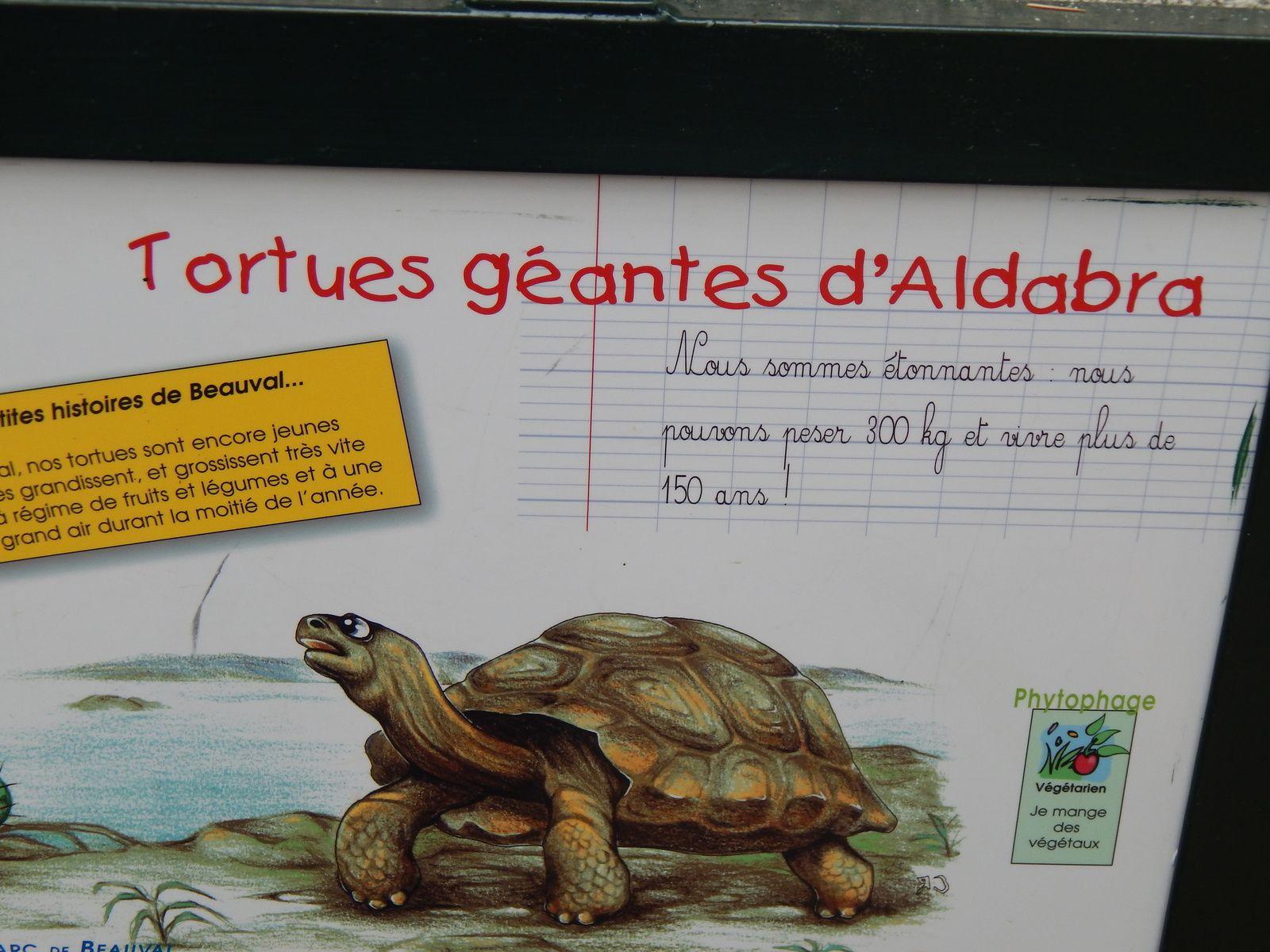 Tortues sillonnnées et tortues d'Aldabra