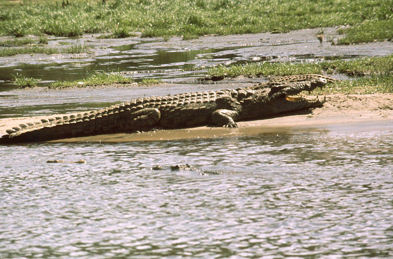 1975 : Sur le Nil au nord de l'Ouganda