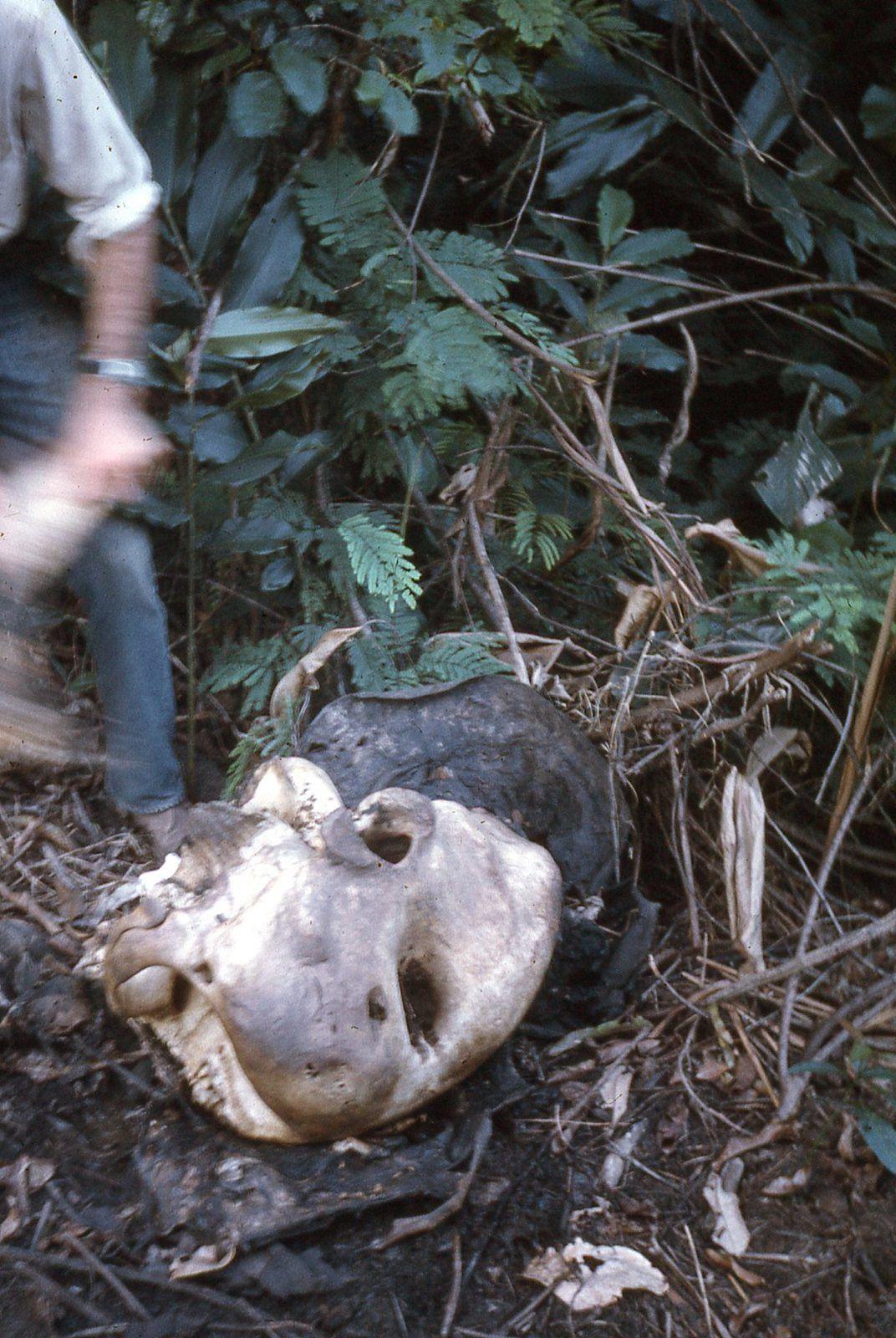 Le premier jour nous ne trouvons qu'un crâne d'éléphant